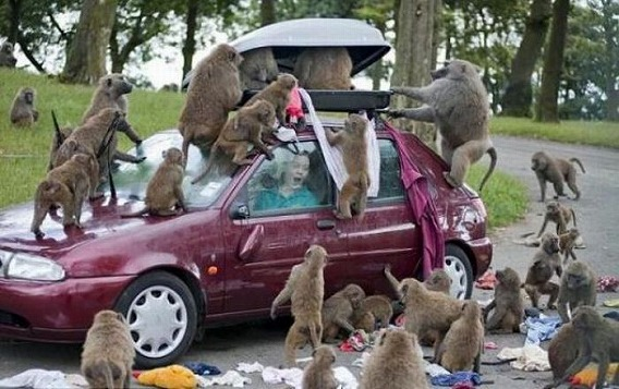 only_in_africa_17