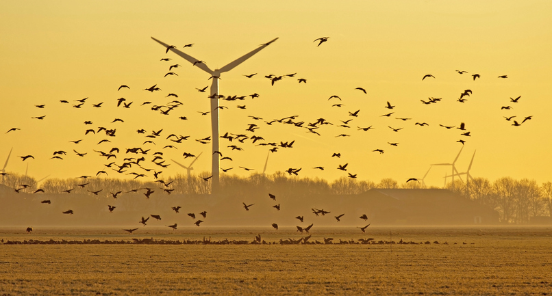 風力発電機によるバードストライク事故