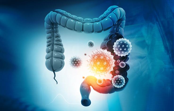 アルコールによる腸内細菌の変化