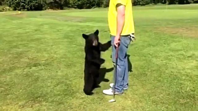ある日ゴルフ場でクマさんに出会った!ゴルファーに真っ直ぐ走り寄ってきた子グマの目的とは?