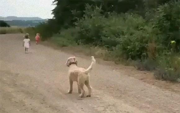 竜巻を体を張って食い止め、地球の危機を防いだ勇敢な犬
