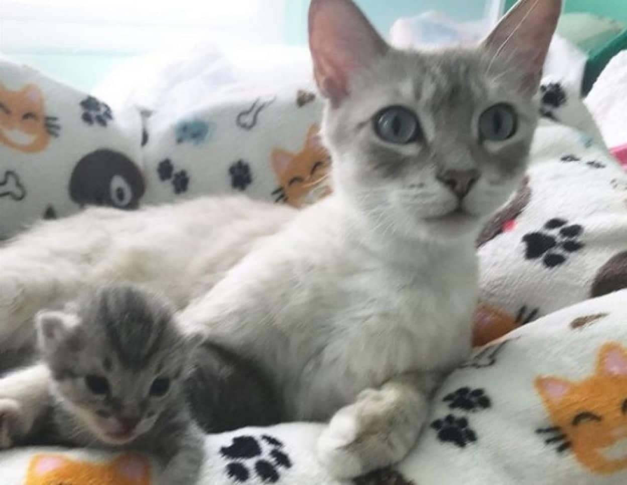 子猫の鳴き声で母猫の母性が溢れだした瞬間