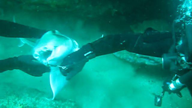 この口のところにくっついてるの取って!ダイバーに助けを求めるサメ