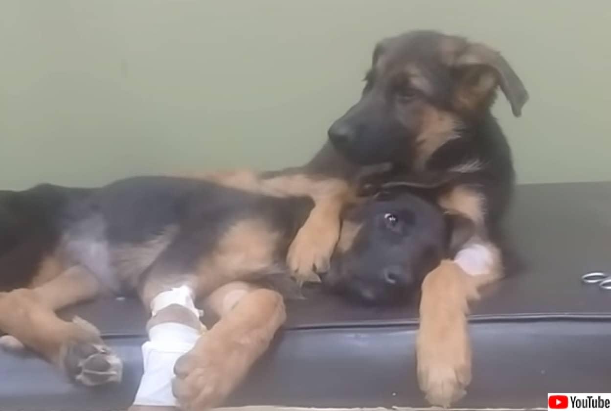 病気の妹を励まそうと抱きかかえる犬