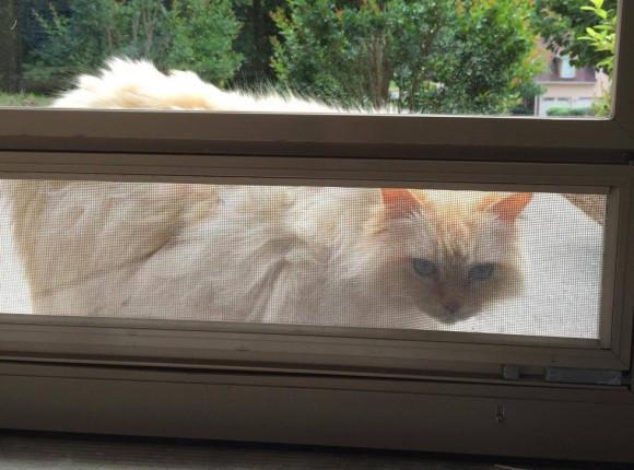愛猫を亡くして落ち込んでいたら、隣人の猫が毎日訪ねてくるようになった。もしかしたら慰めに来てくれているのかも