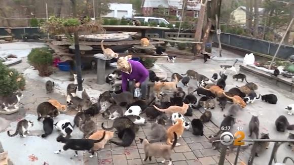 自宅を丸ごと猫屋敷に改造。300匹の猫が暮らす「ハッピー・キャット・サンクチュアリ」(アメリカ)