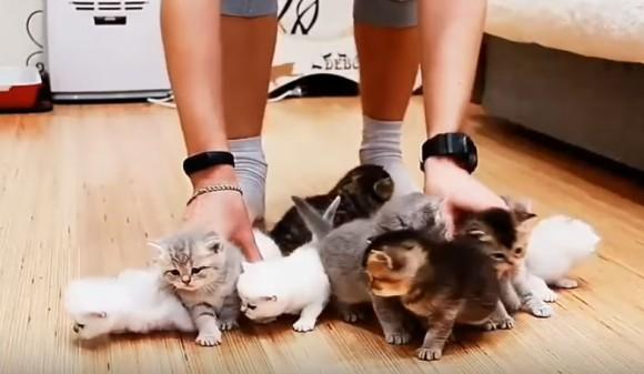 こりゃ大変だわー。子猫10匹の撮影現場がカオスと化していた