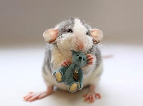 rats-with-teddy-bears-ellen-van-deelen-3_e