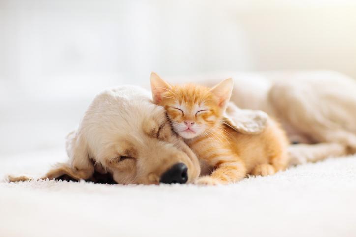 犬と猫を仲良くさせるにはフェロモン製品が有効