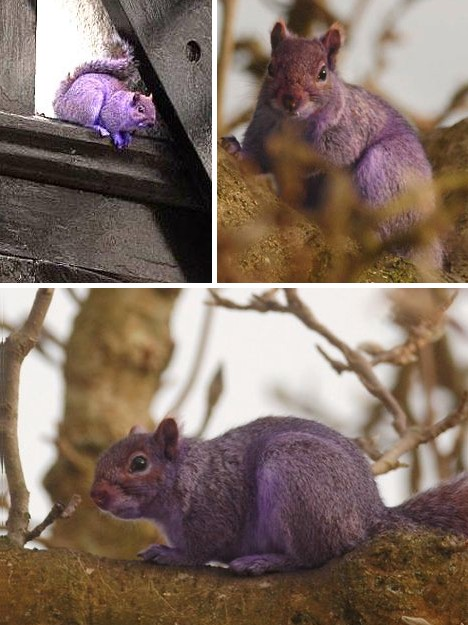 purple_animals_9