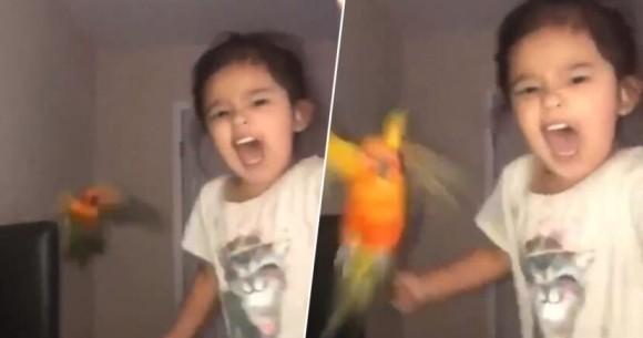 インコに指令を出し、対象人物を攻撃するよう訓練した鳥使いの少女の驚愕の映像