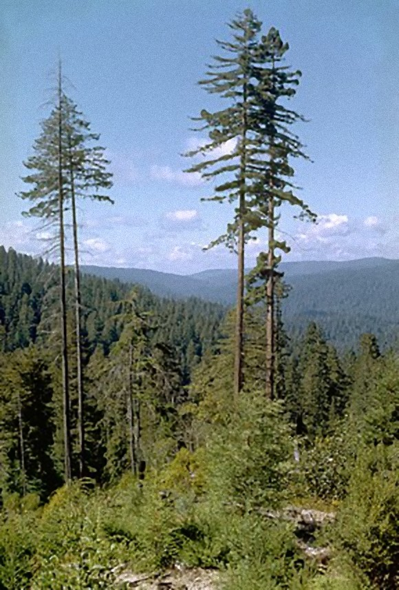 288px-Redwood_National_Park_REDW9343_e