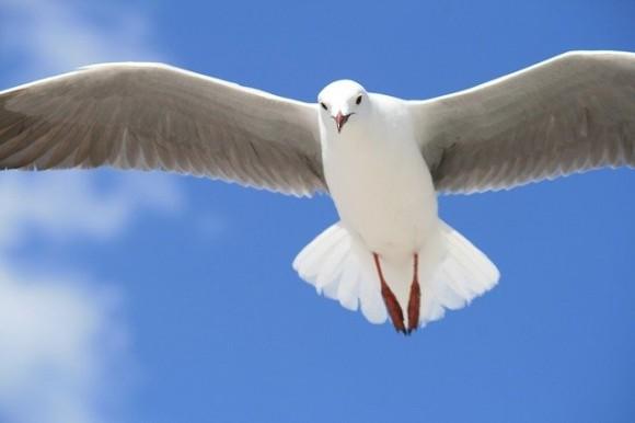 seagull-690170_640_e