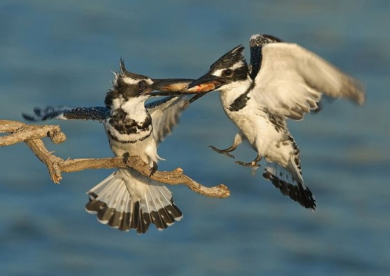 birds_36
