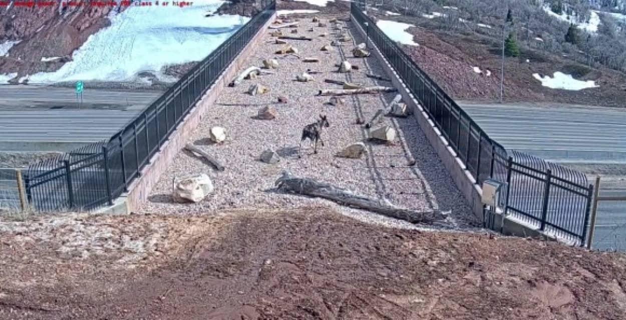 野生動物専用の橋はしっかり使われていた