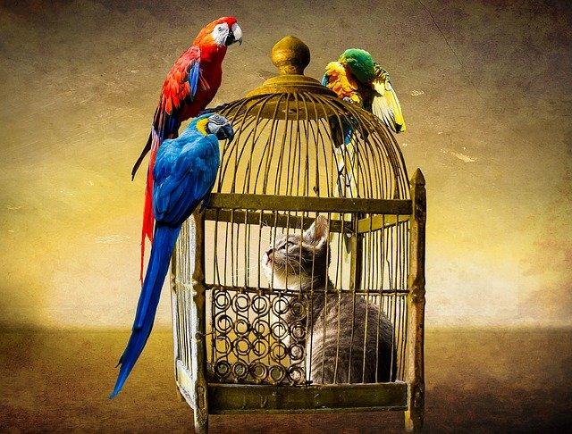 イギリスで動物を物ではなく人と同様の生き物であることを認める法案が可決される