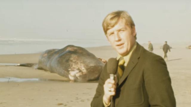 漂着したクジラの爆破解体映像をリマスター
