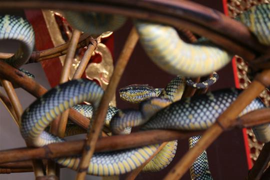Snake-Temple-Penang8
