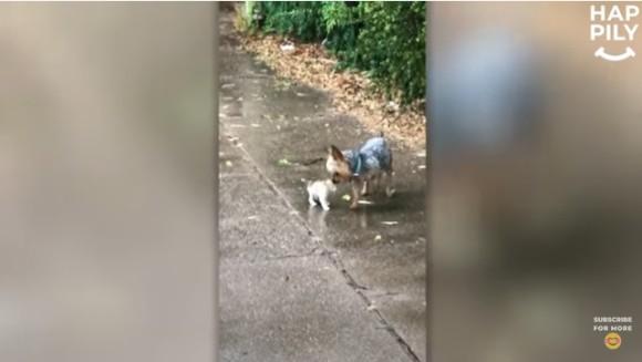 散歩に出かけた犬が、子猫を連れて帰って来た件(アメリカ)