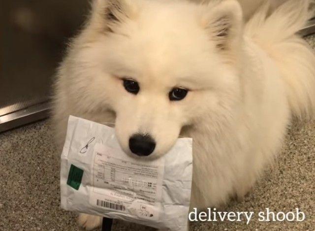 deliverygirl4_e