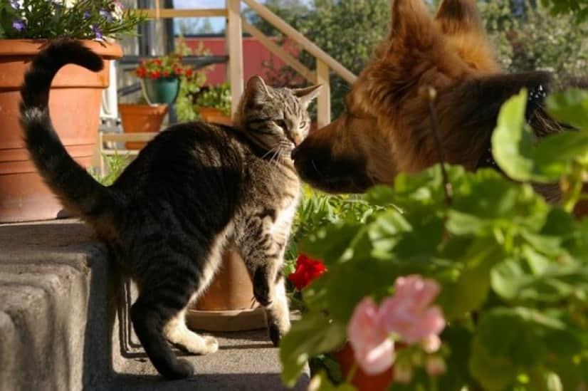 cat-793276_640_e
