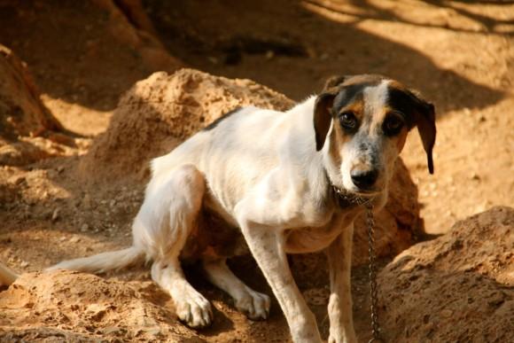 トランプ大統領が動物虐待を連邦犯罪とする法案に署名(アメリカ)