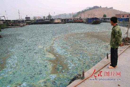 「太湖」の汚染を解消するために2000万匹の鯉を放流(中国)
