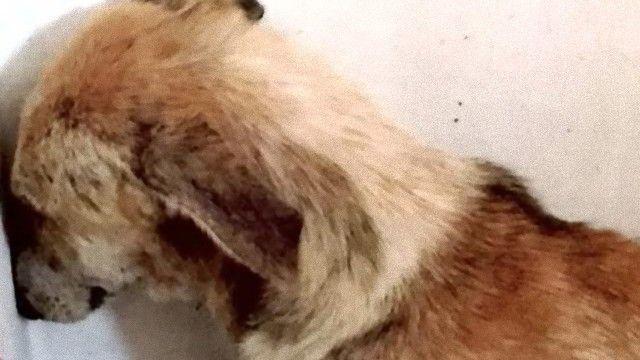 人間と目が合わせられない。トラウマを持った犬、エンジェルが新たな家族のもとでハッピーライフを得るまで