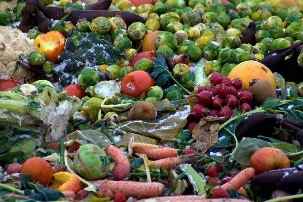 廃棄野菜や果物から強度の高い素材を開発