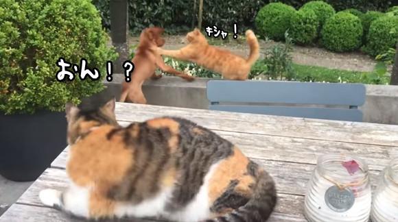 「ワイのダチになにしとんのじゃコラ!」犬と猫のいざこざの一部始終を見ていた猫の咄嗟にとった行動にびっくりだよもぅ。