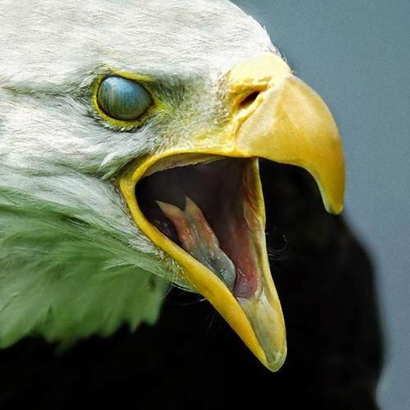 動物の目を守る第三の瞼、「瞬膜...
