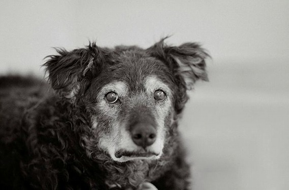old_dogs_15
