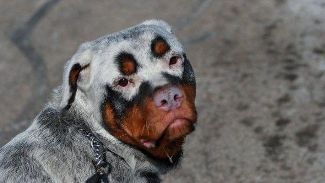 vitiligo-1_e