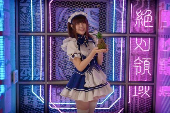 そして盆栽は世界の趣味へ、盆栽専用サイト「JAPAN BONSAI」がオープンしていた件