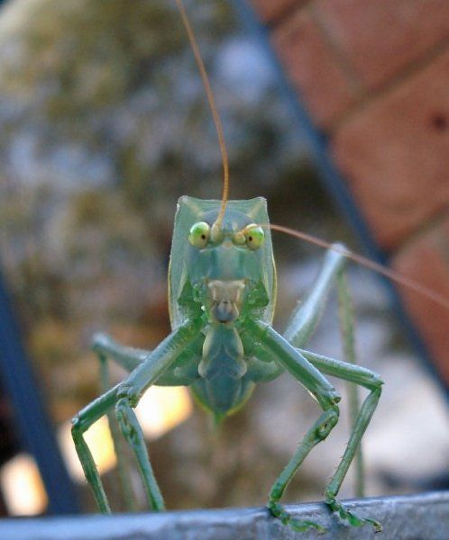alien_insects_04