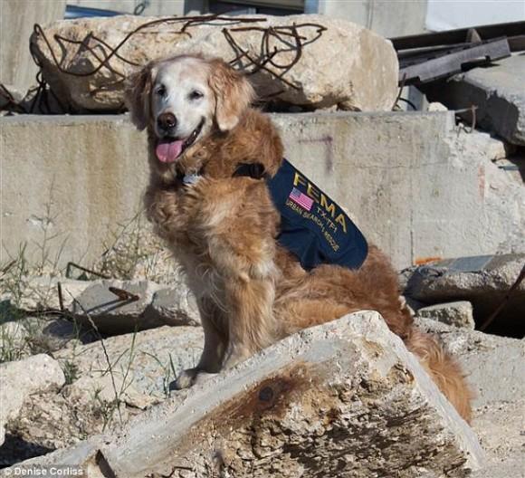 アメリカ同時多発テロ事件で大活躍した最後の救助犬が永眠。消防士たちが直立敬礼し最大限の敬意と感謝で見送る。享年16歳