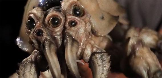 一個ちょうだい。映画「パシフィック・リム」に出てくるダイオウグソクムシみたいな寄生虫量産映像