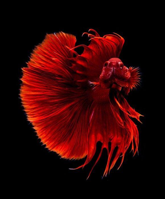 fish-3_e