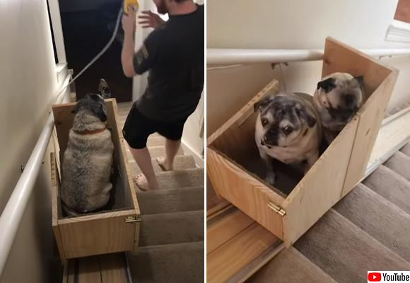 愛犬の為に自作で階段昇降リフト