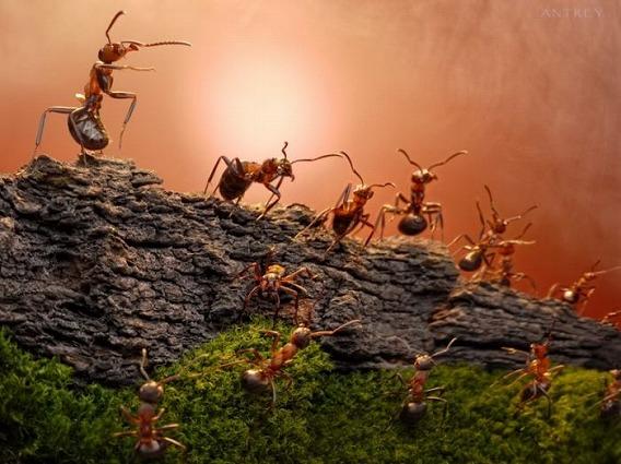 ants_02