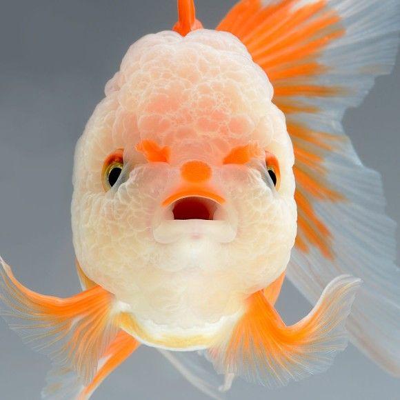 fish-1_e