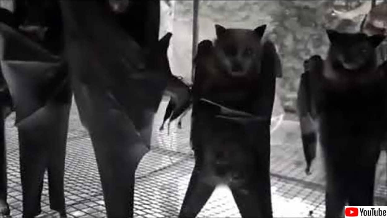 コウモリを逆さまにするとクール