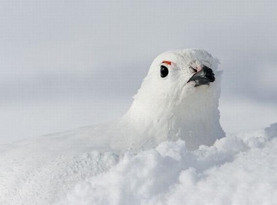 beautiful_photographs_of_birds_03