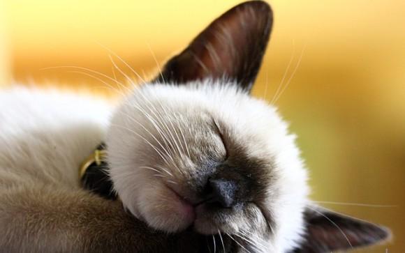 科学者が猫の為に作った、猫を心地よくする完璧な音楽