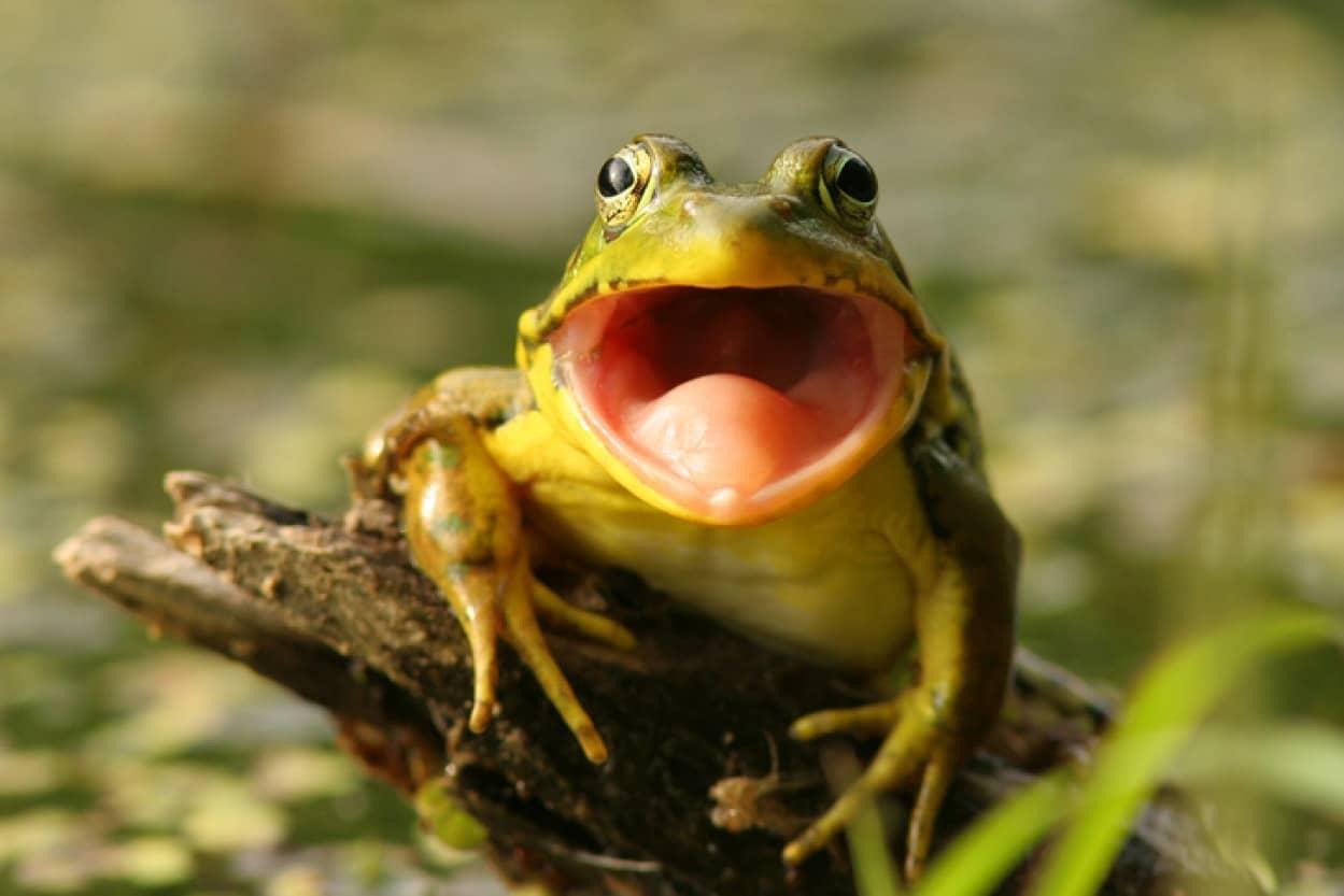 口の中に目のあるカエル