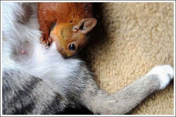 cats_and_squirell_09
