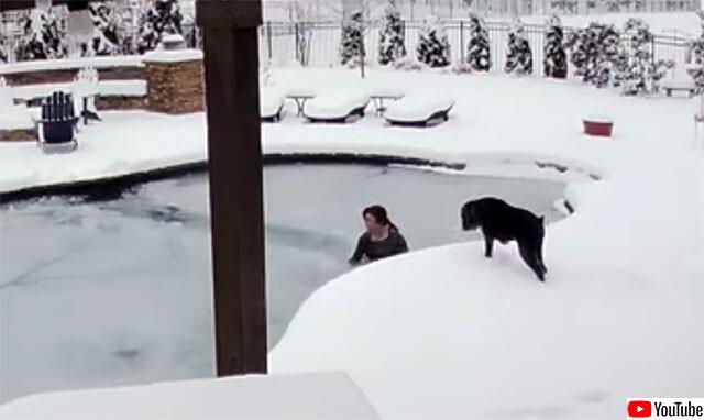 凍ったプールに落ちた愛犬を命がけで救い出した女性