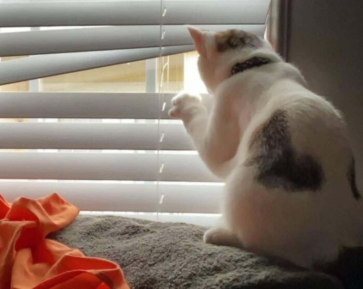 窓の外を詮索する猫のいる風景