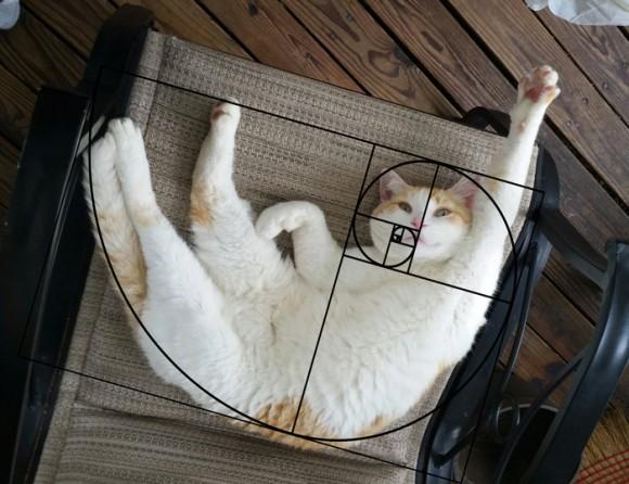 全てはゼーレのシナリオ通り?猫の醸し出すポーズはフィボナッチ数列(黄金比)に裏打ちされていた!
