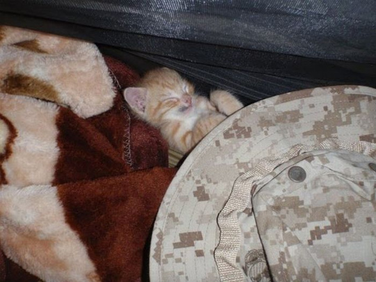 kittens_found_by_us_marines_in_afghanistan_14